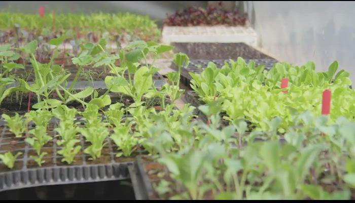 Uso de plantas nativas en la ciudad